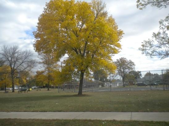 ฤดูใบไม้ร่วงที่Winona MN